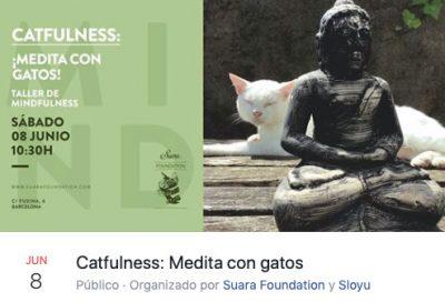 Meditar con gatos en Barcelona